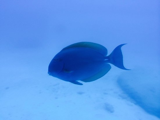 Le Meridien Ile Maurice: fish