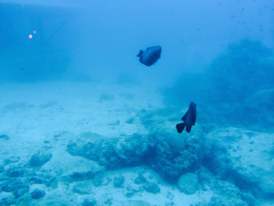 Le Meridien Ile Maurice: easy dive
