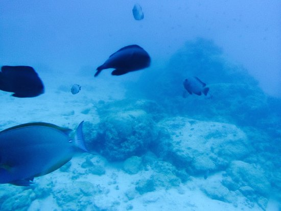 Le Meridien Ile Maurice : fish during easy dive