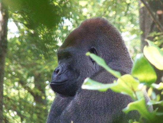 Zoo Atlanta: zoo