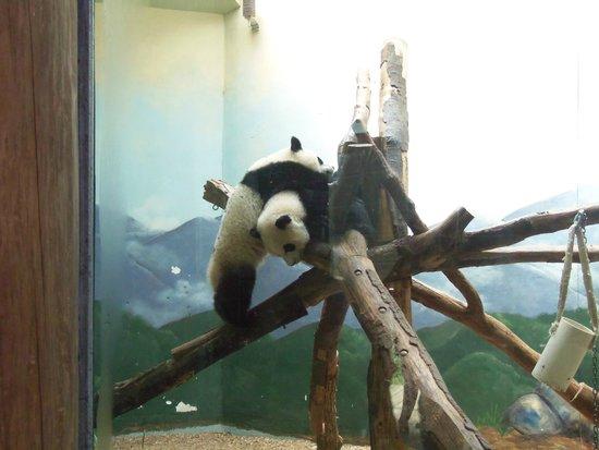 Zoo Atlanta : zoo