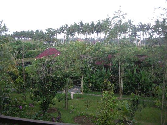 Bhuwana Ubud Hotel : View from balcony