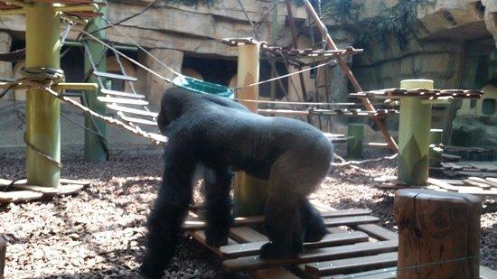Zoo de la Palmyre : parck des grands singes