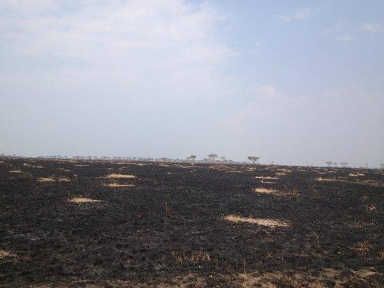 Queen Elizabeth National Park: Parque quemado