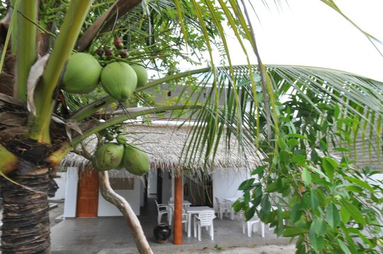 Holiday Home Kelaa : Garden view