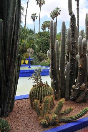 Jardin Majorelle: Der Fontaine carrée bleu Majorelle