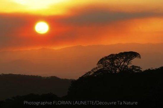 Forest Alive: Couché de soleil spectaculaire à Monteverde.