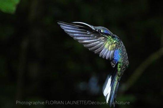 Forest Alive: Les colibris ! Une rencontre exceptionnelle.