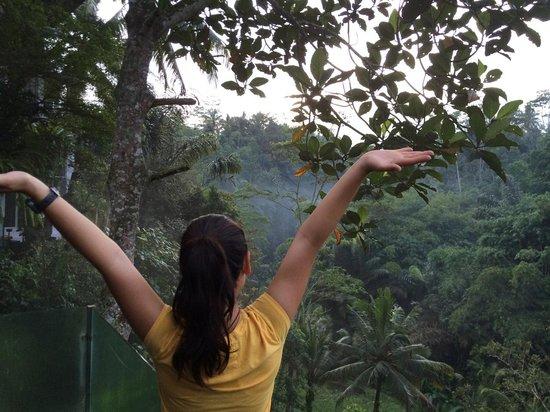 Villa Kalisha : Early Morning Wake up in the Jungle.
