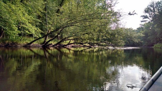 Wolf River Trips and Campground: Pretty, lots of wildlife.  Bald Eagles. Kingfishers.