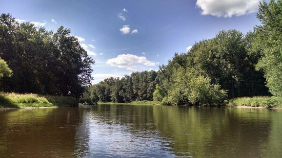 Wolf River Trips and Campground: Blackwater River, gorgeous reminds me of home (NC).