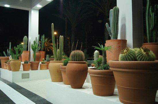H10 Conquistador: Коллекция кактусов впечатлила