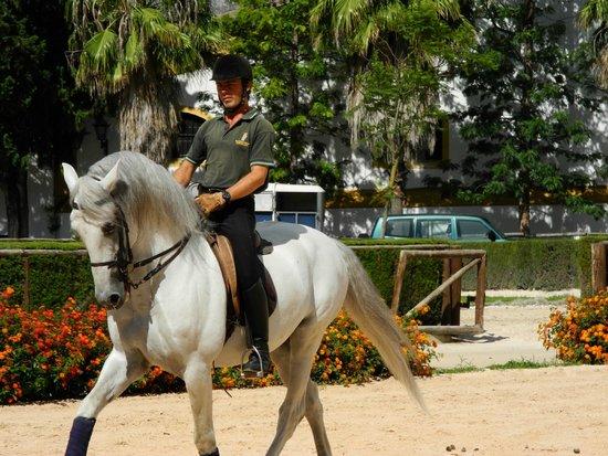 Fundacion Real Escuela Andaluza del Arte Ecuestre: Schöne Pferde