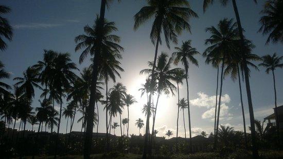 Iberostar Praia do Forte : Área praia