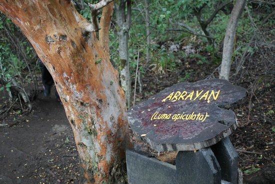 Isla Victoria: He aquí un arrayán