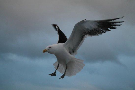 Isla Victoria: Acercamiento de gaviotas para comer galletitas