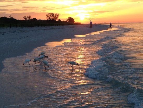 Ocean's Reach Condominiums: sunrise on the beach outside Ocean's Reach