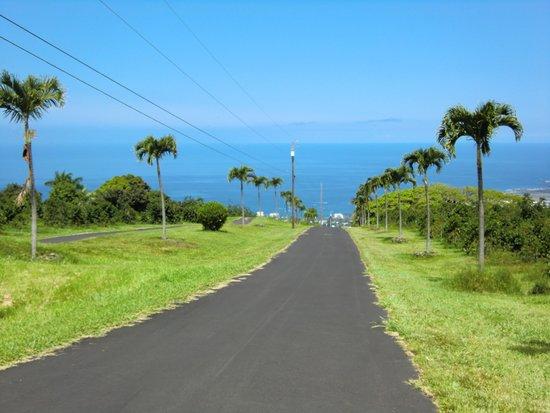 UCC Hawaii Kona Coffee Estate : 農園