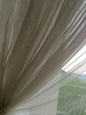 Alam Puisi Villa : Mosquito net dirty