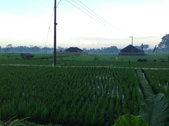 Alam Puisi Villa : The view