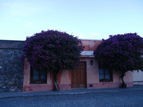 Barrio Historico: Flores em harmonia com as residencias antigas