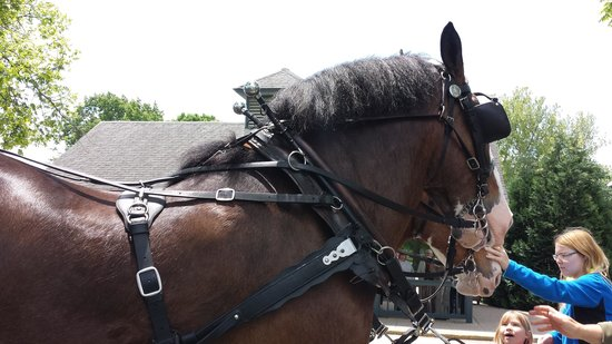 Kentucky Horse Park : Horse from the Horse and Buggy ride