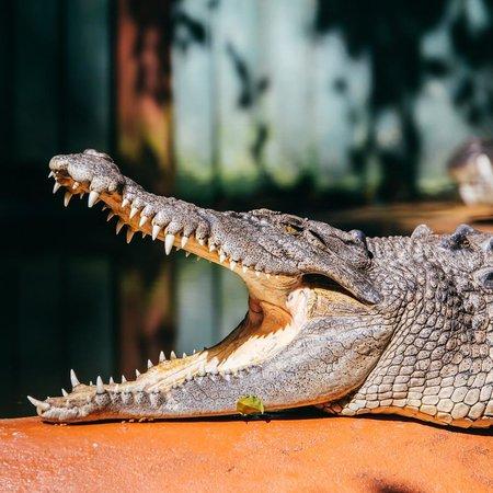 Marineland Crocodile Park : Sunbaking