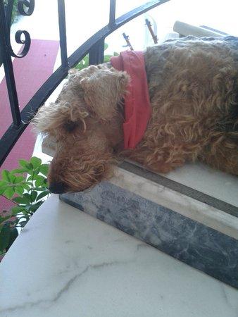 Crescent Hasirci Hotel & Villas: Pancho!!! The best hotel dog ever!