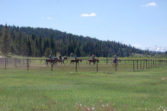 Turpin Meadow Ranch: Excellent horseback riding