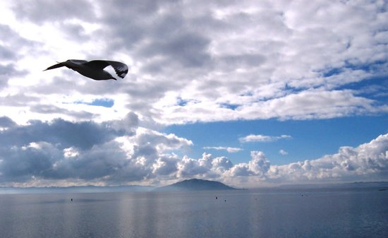 Lake Rotorua: bird's eye view