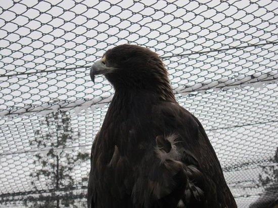 Kamloops Wildlife Park : 迫力あり!