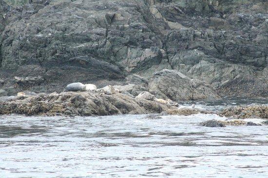 Mystic Sea Charters: Sea Lions