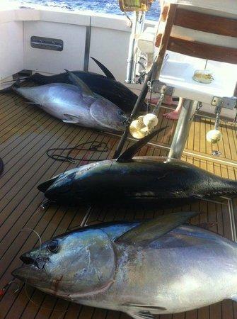 Meson Las Lanzas: Unos atunes recién pescados por nuestros clientes