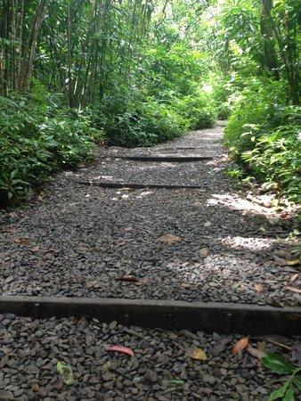 Manoa Falls : Manoa Fall