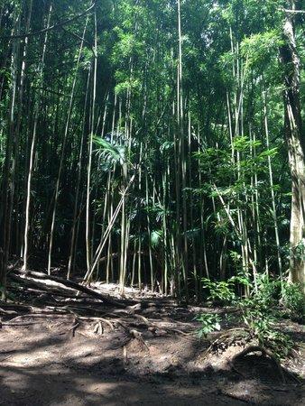 Manoa Falls: Manoa Fall