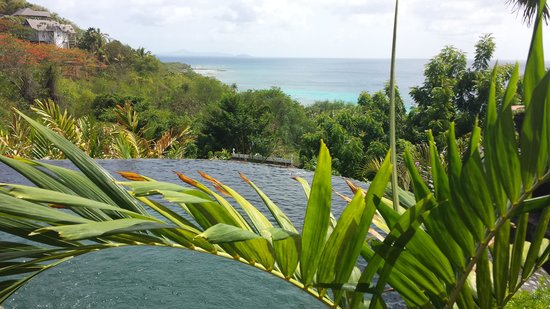 Firefly Mustique Hotel: Pool time