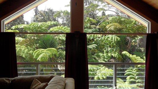 Lokahi Lodge : Blick auf den Regenwald