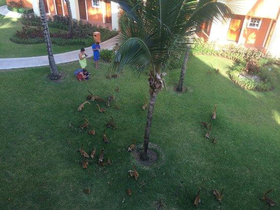 Luxury Bahia Principe Akumal Don Pablo Collection: Lots of wildlife; these are Coati