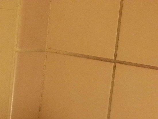 Red Roof Inn Hendersonville: nasty grout