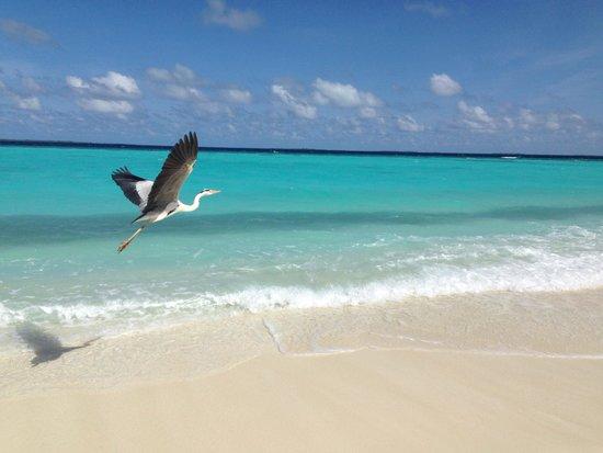 Vakarufalhi Island Resort : La spiaggia davanti alla nostra beach villa