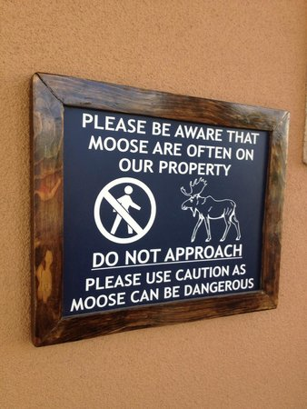 Clarion Suites Downtown: Moose Warning
