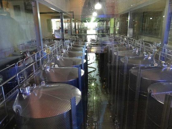Tokara : Tonéis de vinho à vista dos visitantes