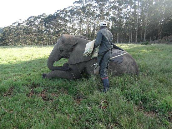 Knysna Elephant Park: Antes de subir!
