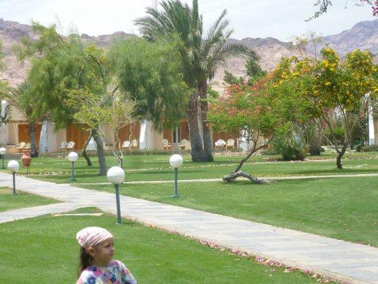 Ibis Styles Dahab Lagoon Hotel: такая территория