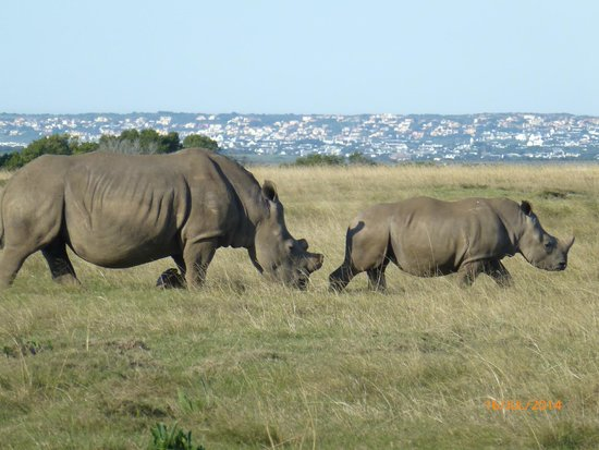 Supertubes Guesthouse: Rhinos at game reserve close by