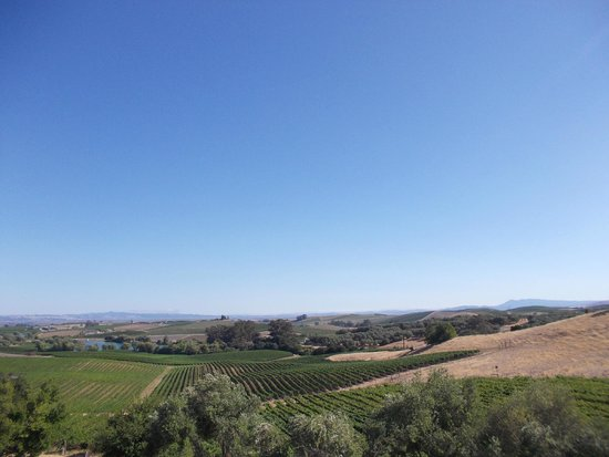 Artesa Vineyards & Winery : View From The Terrace
