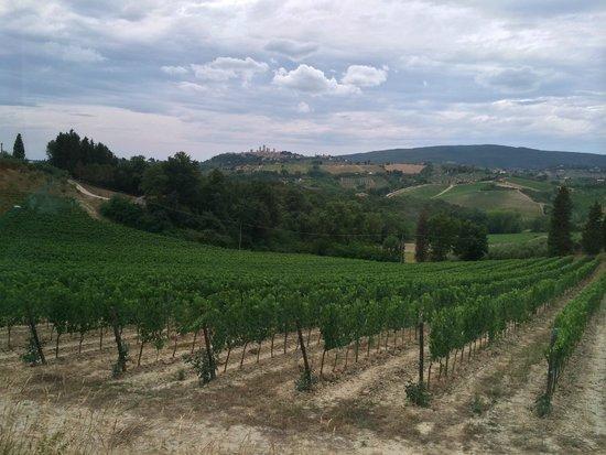 Tenuta Torciano Vineyards: The vineyards