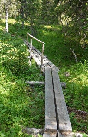 Riisitunturi National Park: Walking the boards.
