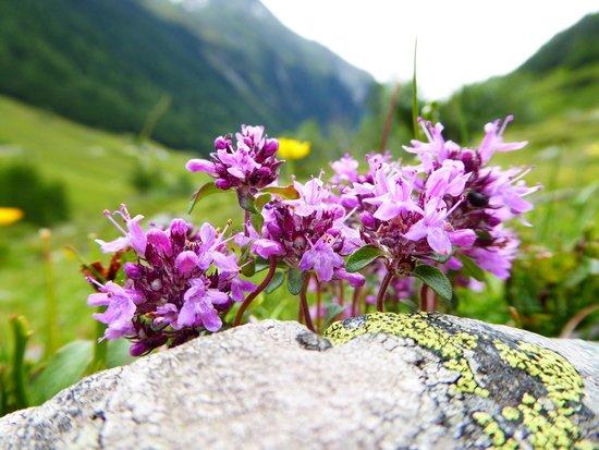 Hotel Alpenhof: Alpenblume