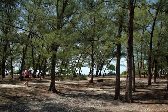 Fort Zachary Taylor Historic State Park : Wooded Area by Beach